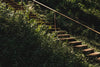 stairs in vines