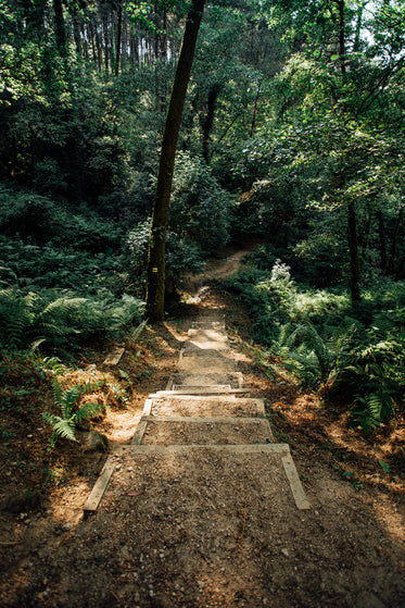 steps down into a lush forest