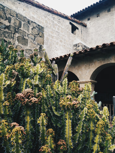 stone and brick building with cactus plants