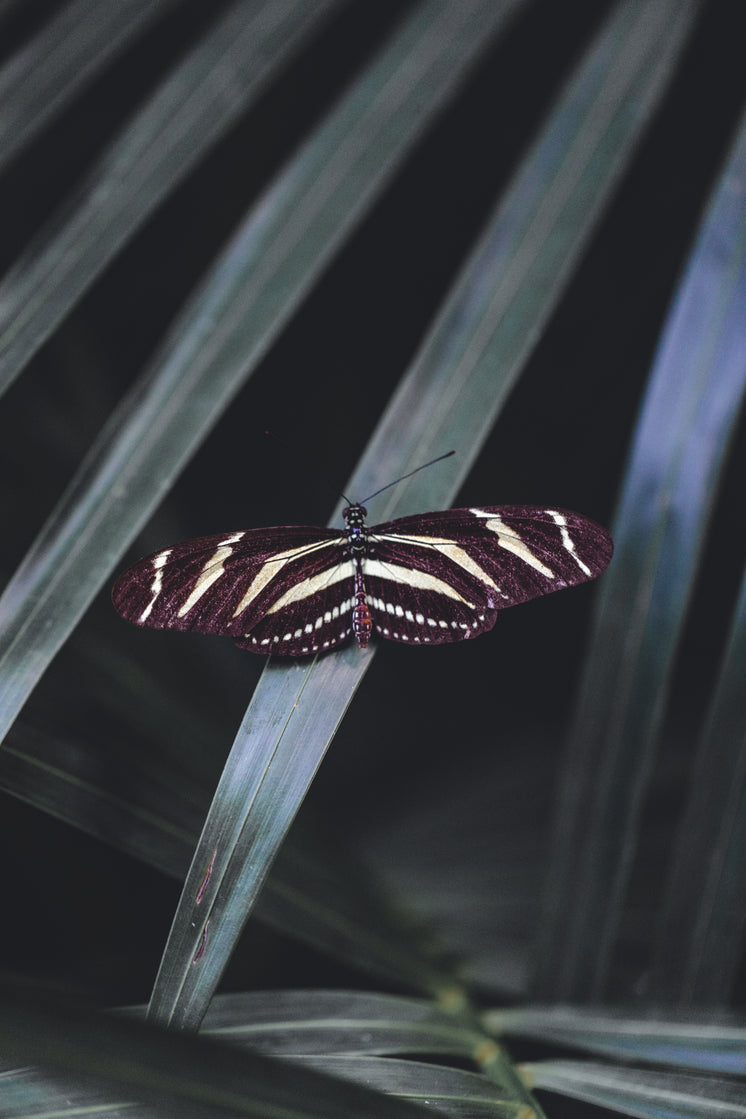 Striped Butterfly With Open Wingspan On Leaf