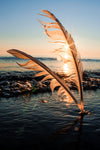 sun sets behind two feathers in the sand