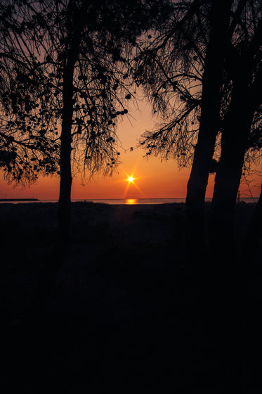 sun sets through two tall silhouetted trees