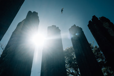 sunbeams shine between tall silhouetted towers