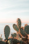 sunlight catches thorns of cacti along waterfront