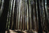 Browse Free HD Images of Sunlight Shining Through Trees In A Forest