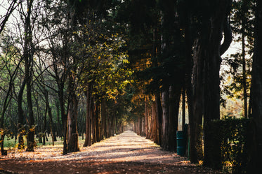 Picture of Sunlight Through Treelined Path — Free Stock Photo