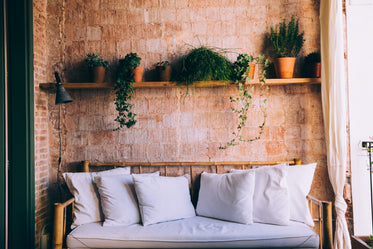 sunny couch and shelved plants