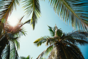 Free Sunny Day Through Palm Trees Photo — High Res Pictures