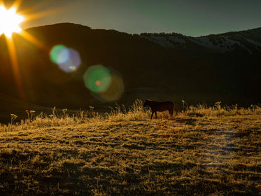 Sunrises And Silhouettes A Horse In A Grassy Field