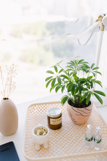 table with potted plant and small items