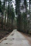 take the forest road