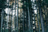 High Res Tall Forest Trees Of Oregon Picture — Free Images