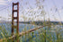 Free Tall Grass By Golden Gate Photo — High Res Pictures