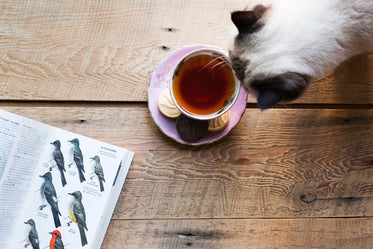 tea time with kitty cat