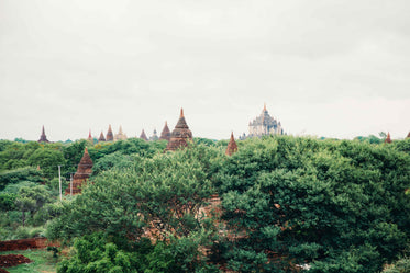 temples & treetops