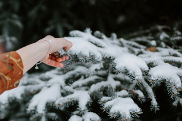 the feel of pine and snow