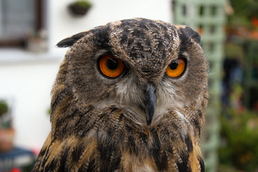 the intense stare of an owl's red eyes