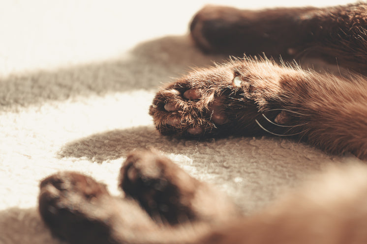 The Paws Of A Brown Fluffy Cat