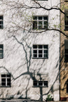 the side of a tall white building shadowed by a tree