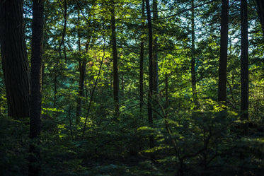 thick lush green forest