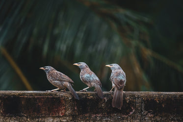 three grey and brown birds