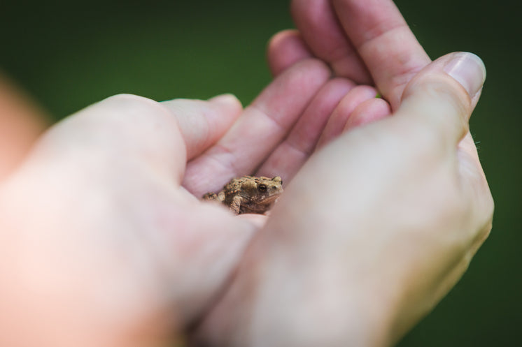 Tiny Frog In Hand
