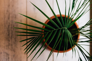 top view of a plant over wooden background