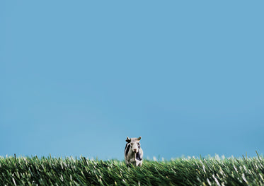 toy cow in grass with blue sky