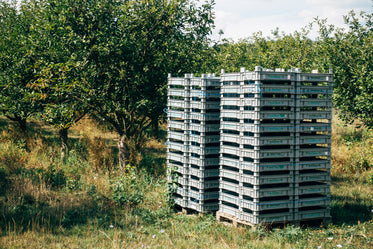 trays stacked at entrance to orchard