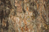 High Res Tree Bark Texture Picture — Free Images