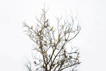 tree full of finches