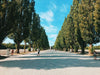 tree lined wide pathway with people on it