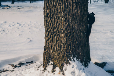 Picture of Tree Trunk With Squirrel In Snow — Free Stock Photo