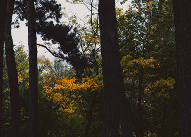 tree trunks & changing leaves