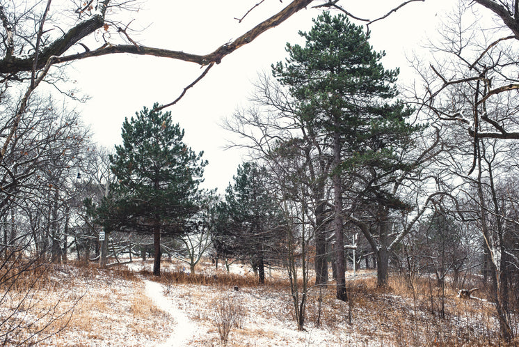 Trees In A Snowy Park