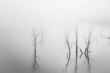 trees over still water in black and white