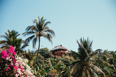 Free Stock Photo of Tropical Hut With Palmtrees — HD Images