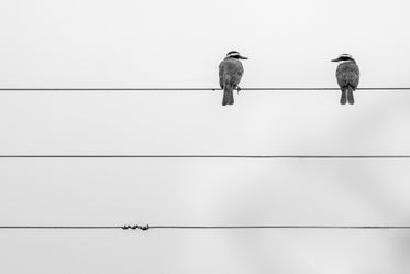 two birds on a wire in black and white