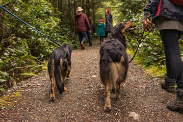 two dogs loving life as they hike through woods