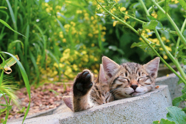 two kittens sleeping with green plants nearby