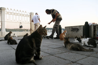 two people are surrounded by tabby cats outdoors