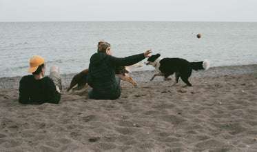 two people sit on a beach throwing a ball for two dogs