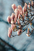 Browse Free HD Images of Vertical Photo Of Full Magnolia Tree Branch