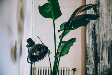 vintage lamp and house plant