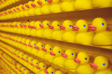 wall lined with hunreds of rubber ducks