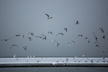 water birds by icy lake