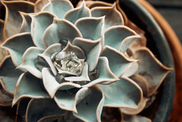 water gathers in succulent plant