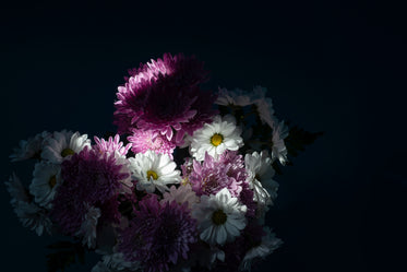 white and purple flowers catch a beam of light