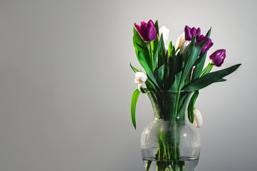 white and purple tulips in a vase