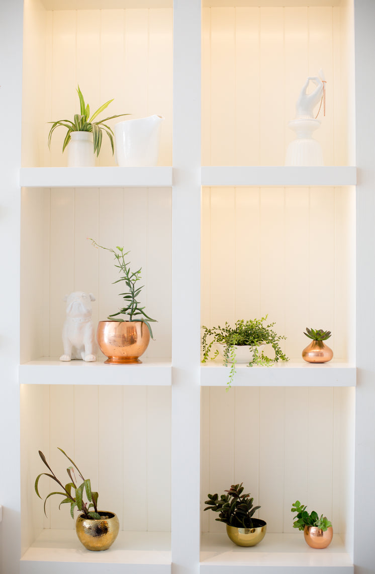 White Bookshelf Filled with Plants And Statues